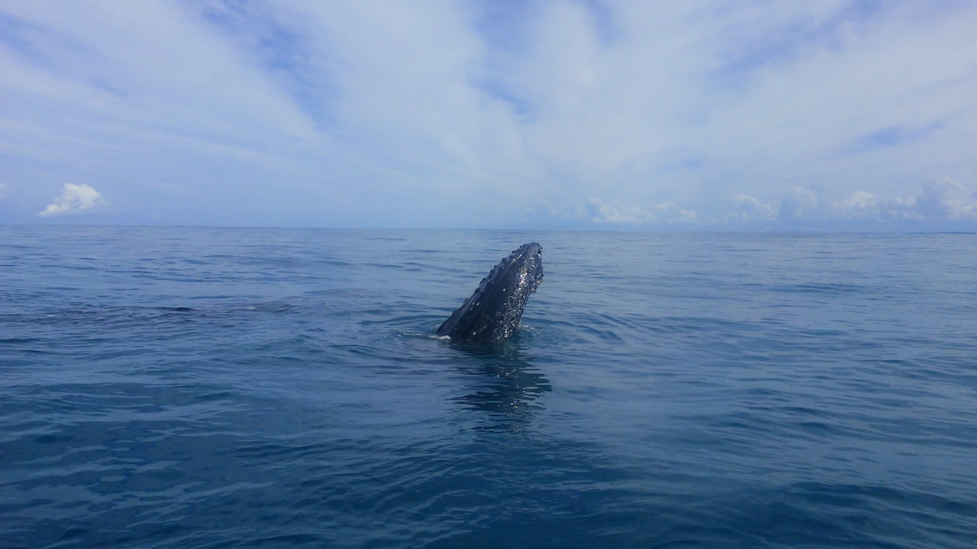Whale Watching Rota Tropical - Morro de São Paulo